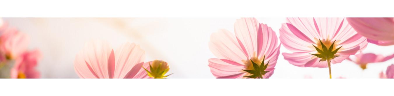 Verset Parfums Create și Fabricate Pentru Farmacii